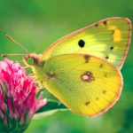 Nature Jigsaw Puzzle Butterfly