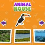 Animal  Home sport