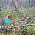 Bernati Forest Journey