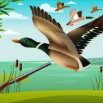 Duck Looking Simulator