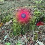 Mysterious Password Forest – Autumn Model 2