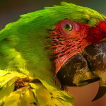 Parrot Chook Puzzle