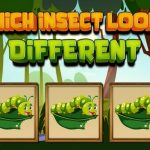 Which Insect Appears to be like Totally different